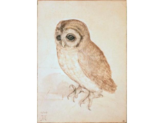 Posterazzi SAL900119473 The Screech Owl Albrecht Durer 1471-1528 German  Poster Print - 18 x 24 in  - Newegg com