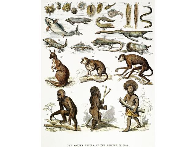 Evolution Chart Nthe Modern Theory Of The Descent Man From Protoplasm To Papuan An