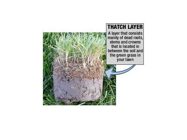 Greenworks 27022 10 Amp 14 in. Electric Dethatcher (841821003104 Home & Garden Lawn & Garden) photo