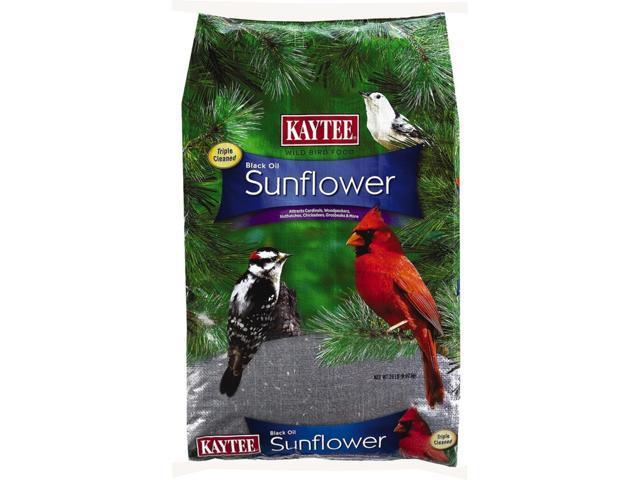 Kaytee Black Oil Sunflower Assorted Species Black Oil Sunflower Wild Bird Food Black Oil Sunflow - Case Of: 1; (071859020280 Home & Garden Lawn & Garden Outdoor Living) photo
