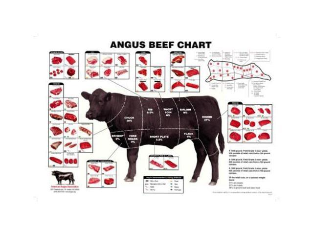 Angus Beef Chart Meat Cuts Diagram Poster 24x36 - Newegg.comNewegg.com