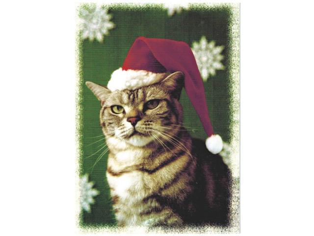 Boxed Cat Christmas Cards.Maine Coon Cat Boxed Christmas Cards Santa Cat Box Of 14 Cards And Envelopes Newegg Com