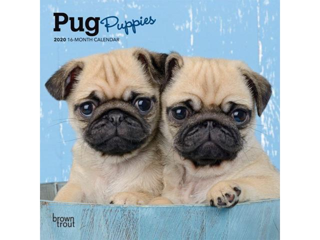 2020 Pug Puppies Mini Calendar, by BrownTrout - Newegg com
