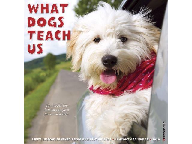 2020 What Dogs Teach Us Wall Calendar, by Willow Creek Press - Newegg com