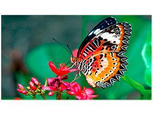 """NEC UN462A 46"""" Ultra Narrow Bezel Full HD LED LCD Commercial Display with USB/Micro SD Media Player, 700nit"""