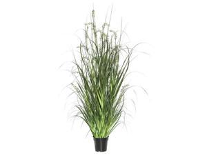 Vickerman TN171248 48 in. Green Sheeps Grass in Pot