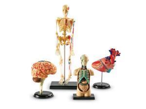 Learning Resources Anatomy Models Bundle Set (LER3338)