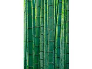 Bamboo forest, Hangzhou, Zhejiang Province, China Poster Print by Keren Su (12 x 17)
