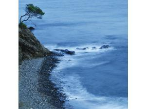 Isolated Tree On A Cliff Overlooking A Pebble Beach Along The Coast Benalmadena-Costa Malaga Andalusia Spain Poster Print (15 x 15)