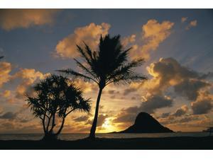 Hawaii Oahu Kualoa County Beach Park Mokolii Island (Chinaman Hat) At Sunrise Golden Light Palm Tree In Foreground Poster Print (19 x 12)