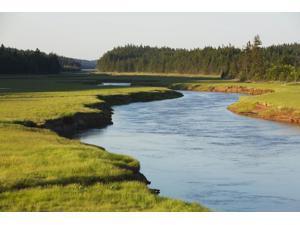 River near Alma New Brunswick Canada Poster Print (19 x 12)