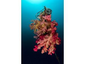 A buoy encrusted in soft coral Cebu Philippines Poster Print by Bruce ShaferStocktrek Images (11 x 17)