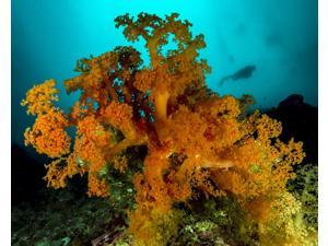 Soft coral with diver in background Cebu Philippines Poster Print by Bruce ShaferStocktrek Images (17 x 11)