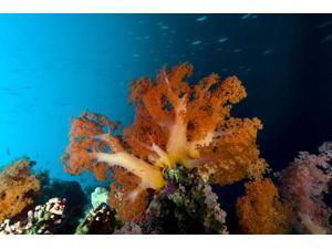 Soft coral scene Cebu Philippines Poster Print by Bruce ShaferStocktrek Images (17 x 11)