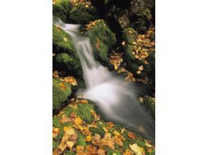 Mount Head Creek Mount Carleton Provincial Park New Brunswick Poster Print (11 x 17)