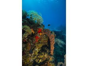 Coral reef in St Croix US Virgin Islands Poster Print by Jennifer IdolStocktrek Images (11 x 17)