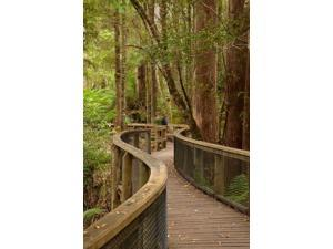 Footpath Through Forest to Newdegate Cave, Tasmania, Australia Poster Print by David Wall (24 x 36)