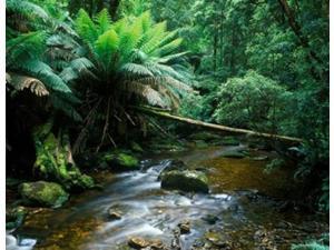 Nelson Creek, Franklin Gordon Wild Rivers National Park, Tasmania, Australia Print by Rob Tilley (18 x 14)