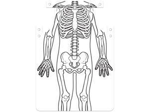"""Roylco Apron Skeleton Art 12-1/2""""Wx1/100""""Lx25-9/10""""H 12/PK WE 59801"""