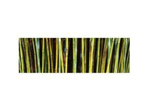 Panoramic Images PPI122749L Bamboo trees in a botanical garden  Kanapaha Botanical Gardens  Gainesville  Alachua County  Florida  USA Poster Print by Panoramic Images - 36 x 12