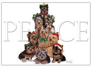 Yorkshire Terrier Christmas Cards Peace : 10 Holiday Cards with Envelopes - ADORABLE!