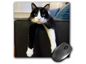 3dRose LLC 8 x 8 x 0.25 Inches Mouse Pad, Black and White Cat with Nothing To Do (mp_23450_1)