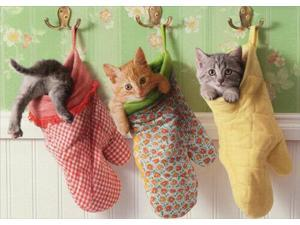 Kittens In Oven Mitts Funny Cat Mothers Day Card - Greeting Card by Avanti Press