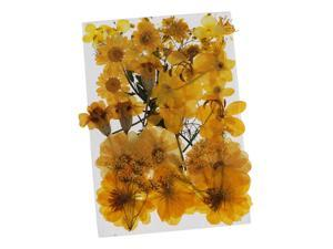 36/37/38/39/42Pc Natural Real Pressed Dried Flowers DIY Scrapbook Yellow