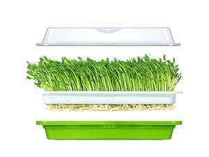 Seed Sprouter Tray SoilFree Food Grad PP Healthy Wheatgrass Grower with Cover and 2 Size Hole