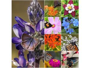Package of 30000 Seeds Bird and Butterfly Wildflower Mixture 100 Pure Live Seed NonGMO Seeds by