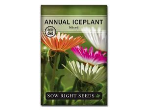 Right Seeds Ice Plant Flower Seeds for Planting Beautiful Flowers to Plant in Your Garden NonGMO Heirloom Seeds Wonderful Gardening Gifts 1
