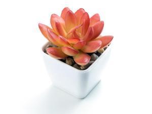 ® Mini Artificial Succulent Greenery Bonsai Plants in Plastic Pot