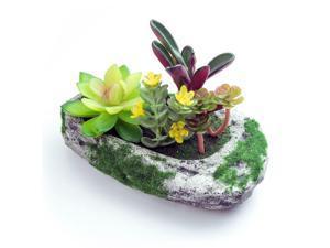 ® Decorve Plastic Artificial Succulent Greenery Bonsai Plants