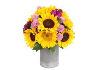 Sunflowerguy - Garden Walk - Sunflower & Dianthus Bouquet