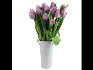 Stargazer Barn -15 Purple Tulips