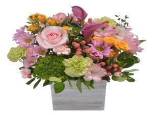 Farm Direct Fresh Flower Centerpiece