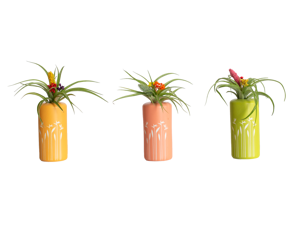 LiveTrends Birds of Paradise - set of 3