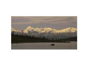 Panoramic Images PPI67383L Moose standing on a frozen lake  Wonder Lake  Denali National Park  Alaska  USA Poster Print by Panoramic Images - 36 x 12