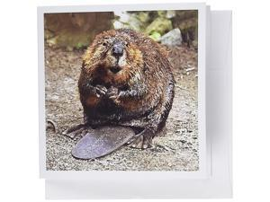 3dRose Beaver - Greeting Cards, 6 x 6 inches, set of 12 (gc_4660_2)
