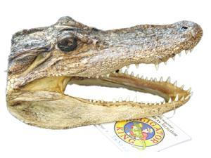 Gator Alligator Claw Paw Back Scratcher on Stick New Orleans Bayou Cajun Voodoo